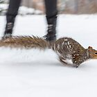 Central Park Squirel by Nicholas Jermy