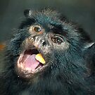 Marmoset Eating by imagetj