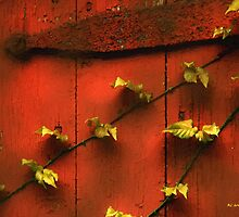 Clinging Vines by RC deWinter