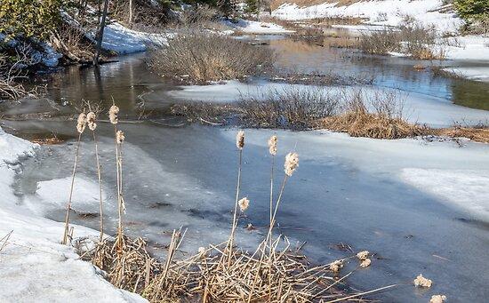 Last Days of Winter by Jola Martysz