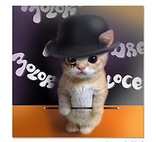 """CATS IN HATS """"Saucer of Milkbar"""" by Patty McNally"""