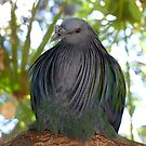 I Have A Designer Shawl - Nicobar Pigeon - South Africa by AndreaEL