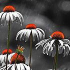 *Cone Flowers in the Rain* by DeeZ (D L Honeycutt)