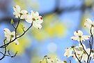 Spring Skies by NatureGreeting Cards ©ccwri