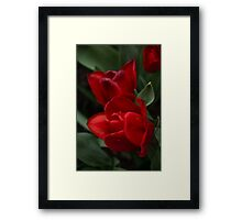 Rainy Spring Garden with Vivid Red Tulips Framed Print