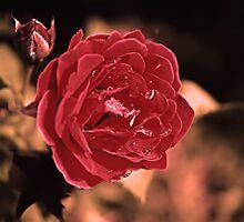 True Romance by Emily Rose