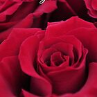 Red Roses - I Love You by Karen Duffy
