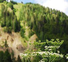 Friulian Dolomites with Foreground Wild Flower by jojobob