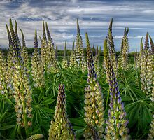 Valley Delight by Charles & Patricia   Harkins ~ Picture Oregon