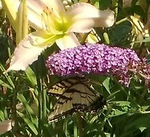 Butterfly at Welwyn Mansion by avalon1975