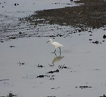 Lone Egret by Vicki Spindler (VHS Photography)