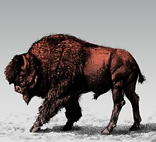 Buffalo by karmabees
