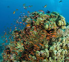 Underwater photography of a shoal of fish swimming  by PhotoStock-Isra