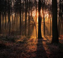 Winter Woodland Dawn by Photokes