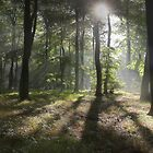 Sunlight in Summer Woods by Photokes
