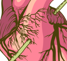 heart anatomical Sticker