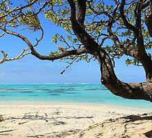 Framed View - Coral Reef by Honor Kyne