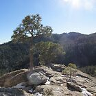 Snow and Sunshine on Mt Lemmon by Ingasi