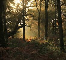 A sunrise in the forest by Graham Ettridge