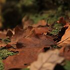 Autumn Leaves by Graham Ettridge