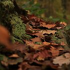 Fallen Autumn Leaves by Graham Ettridge