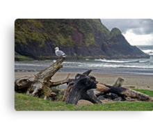 Seagull and Driftwood Canvas Print