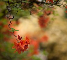 Azalea Revelation by mikereid
