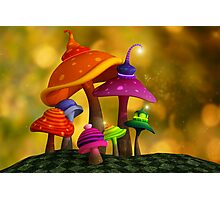 Whimsical Mushrooms Photographic Print