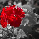 Red Flower by George Lenz