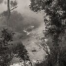 Mist on the Blackwood, Bridgetown, Western Australia by Elaine Teague