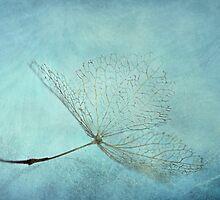 winterblues by lucyliu