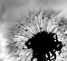 DANDELION PUFF BALL (1) by Sandra  Aguirre