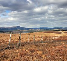 Never ending Fence by GreigMcIntosh