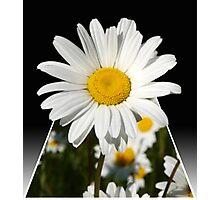 Pop Up Daisy Photographic Print