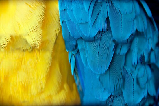 Parrot Plumes by phil decocco
