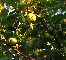 The apple doesn't fall far by MarianBendeth