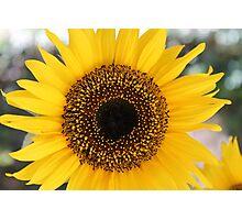 Sunflower Print Photographic Print