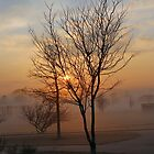 Foggy Sunset in Iowa by Keala
