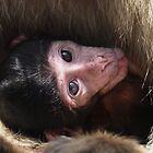 Nursing Baby Barbary Ape by clizzio