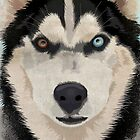 Husky portrait by Carl Conway