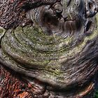 Tree Knot by Avril Harris