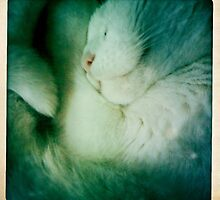Sleeping Furball  by Nalinne Jones