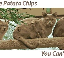 Cats Are Like Potato Chips by amanda metalcat