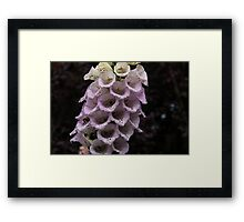 Exquisite Foxgloves Up Close Framed Print