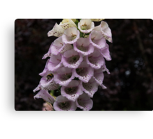 Exquisite Foxgloves Up Close Canvas Print