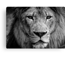Aslan The Great Canvas Print