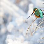 Wintering Kingfisher by Remo Savisaar