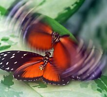 Flirting butterflies by Arie Koene