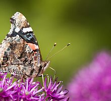 Red Admiral Butterfly With Green Bokeh by Dan Dexter
