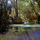 Rainbow at Katherine Hot Springs by Julia Harwood